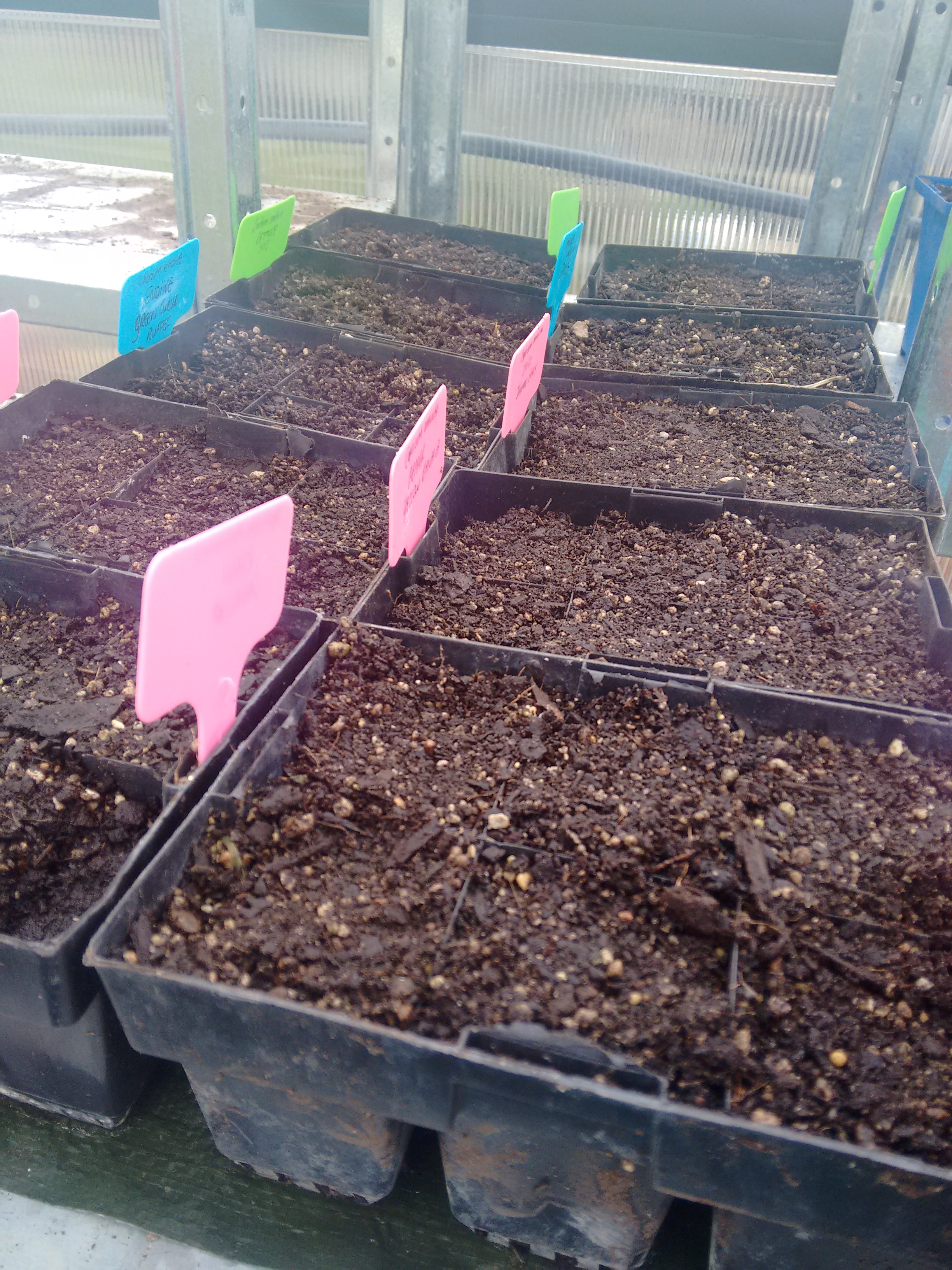 Sowing trays