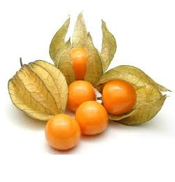 Cape Gooseberry (Physalis edulis)