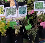 Plants on market stand