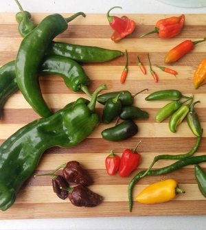 How to grow Chillies & Peppers