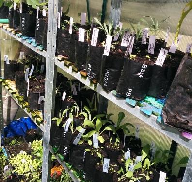 Bags of herbs