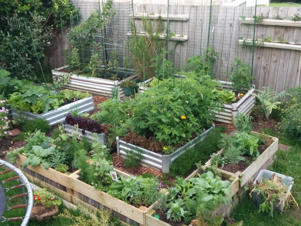 5 Top Tips for growing organic herbs and produce in a regenerative way